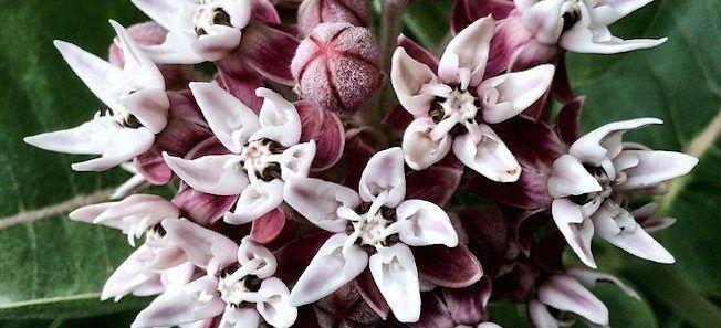 blossom crop