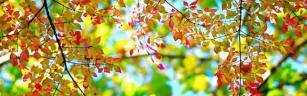 leaves-crop