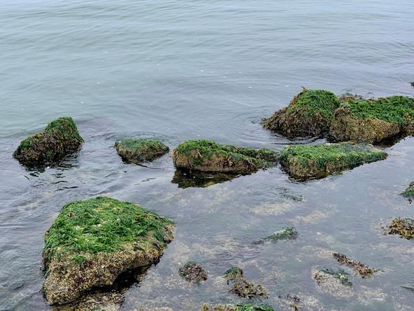 seaweed rocks